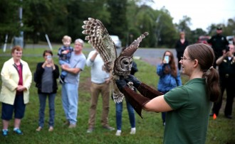 barred owl rescued 2